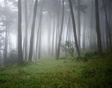 濃霧で幻想的なディズニーリゾート 10/30 #TDR_now