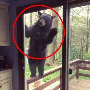 【外出自粛中のゴールデンウィークの過ごし方】で動物達が家に様子見に来ている・ディズニーランドに行…他