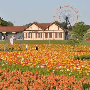 この夏絶対行きたいドイツ村!【ドイツ村の楽しみ方】