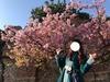 休園中でも桜は美しく咲き誇る!!この春はパークで美しき桜は見られるのか★